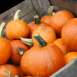 Pumpkin Crop in Cart with copy space. - Stock Photo