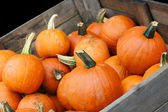 Pumpkin Crop in Cart with copy space. — Stock Photo