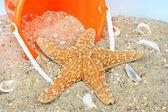 Starfish on beach with pail — Stock Photo
