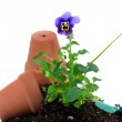 Pansy being potted — Stock Photo