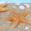 Starfish - Stockfoto