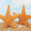 Two playful starfish on the beach — Stock Photo