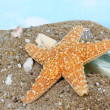 Starfish Climbing Bottle — Stock Photo
