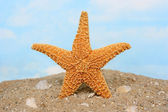Sugar starfish standing upright — Stock Photo