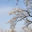 Winter picture of trees in frost — 图库照片