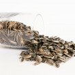 A handful of sunflower seeds — Stock Photo