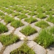 Stock Photo: Green grass grows from concrete