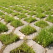 Green grass grows from the concrete — Stock Photo