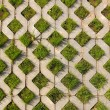Stock Photo: Green grass grows from the concrete