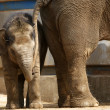 Mother elephant with her baby — Stock Photo