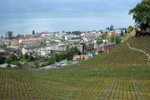View over the vineyards and buildings of the city of Montreux, Switzerland — Stock Photo