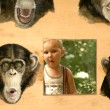 Child and apes. — Stock fotografie