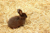 Black Rabbit at a straw. — Stock Photo