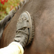 Groom cleans horse — Stock Photo