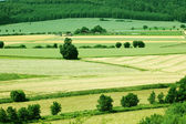 Fields and woods. — Stock Photo
