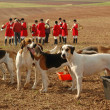 Stock Photo: Foxhounds.