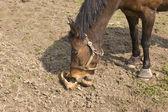 лошади пользуется свеклы. — Стоковое фото