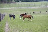 Koń biegnie. — Zdjęcie stockowe