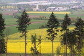 Outskirts of town and canola fields. — Stock Photo