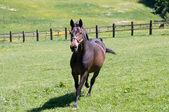 лошадь бежит. — Стоковое фото