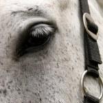 Постер, плакат: Eye of horse