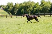 коричневые лошади проходит. — Стоковое фото