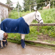 Stock Photo: Horse in blanket and boots.