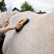 Caring for horse. — Stock Photo