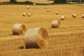 Bales of straw. — Stock Photo
