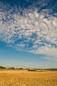 Field and sky. — Stock Photo