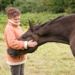 Woman pets horse. — Stock Photo