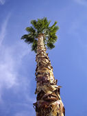 Tall Palm Tree — Stock Photo