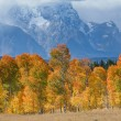 Stock Photo: Fall at Grand Tetons