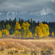 Yellow trees against a moody sky — Stock Photo