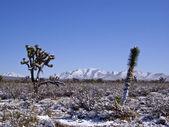 Desert in Snow — Stock Photo