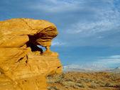 Desert Sentinal — Stock Photo