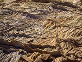 Desert Spines — Stock Photo