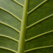 Dark green leaf — Stock Photo