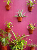 Cacti Wall — Stock Photo
