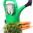 Carrots and  watering can — Stock Photo