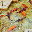 Small fishes — Stock Photo #2806390