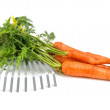 Carrot and gardening tools — Foto de Stock