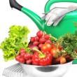 Watering can and  vegetables. - Foto Stock