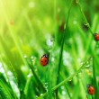 Fresh green grass with water drops - Stock Photo