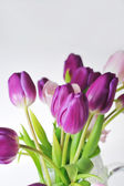 Tulipány — Stock fotografie