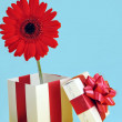Gift and red flower - Foto Stock