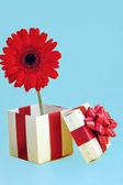 Geschenk und rote blume — Stockfoto