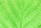 Textured green leaf — 图库照片
