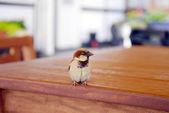 Small bird — Stock Photo
