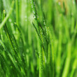 Dew on  green grass — Stock Photo
